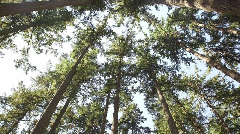 trees_30425159812_o